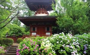 鞄工房山本版 奈良ガイド ~「久米寺」のあじさい園を訪れました~