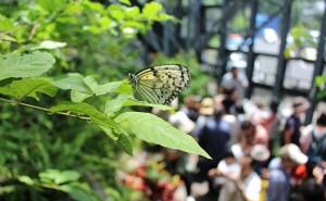 「昆虫館むし祭り2018」に行ってきました!