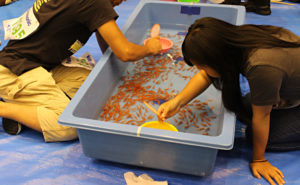 【鞄工房山本 奈良本店】金魚が泳ぐ城下町、大和郡山市。 ~「第23回 全国金魚すくい選手権大会」へ行ってきました!(後編)~