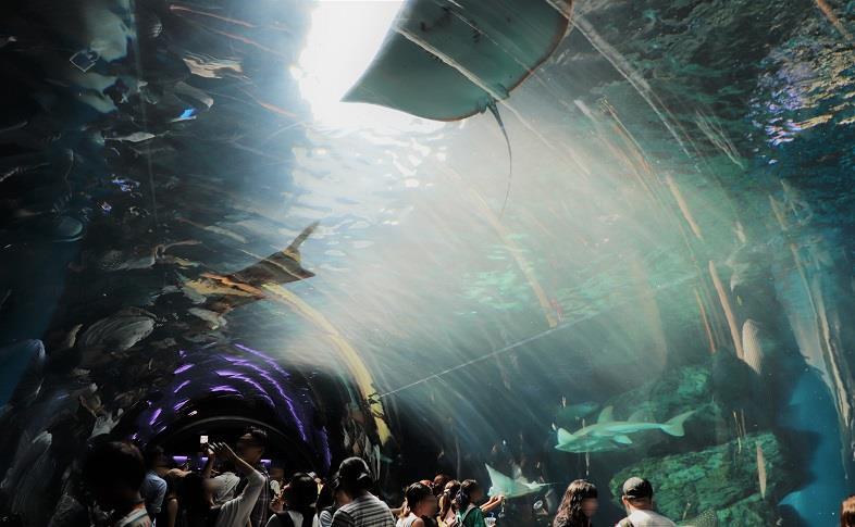 【鞄工房山本 表参道店】夏の思い出日記。水族館「アクアパーク品川」へ行ってきました。